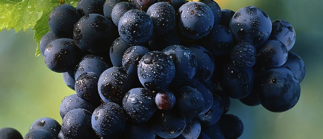 Grapes-Food-and-Fruits-high-Quality-Picturesaaa